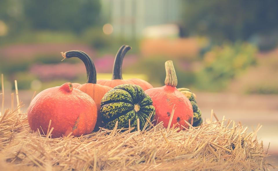 87985a44 pumpkin 2989569 960 720