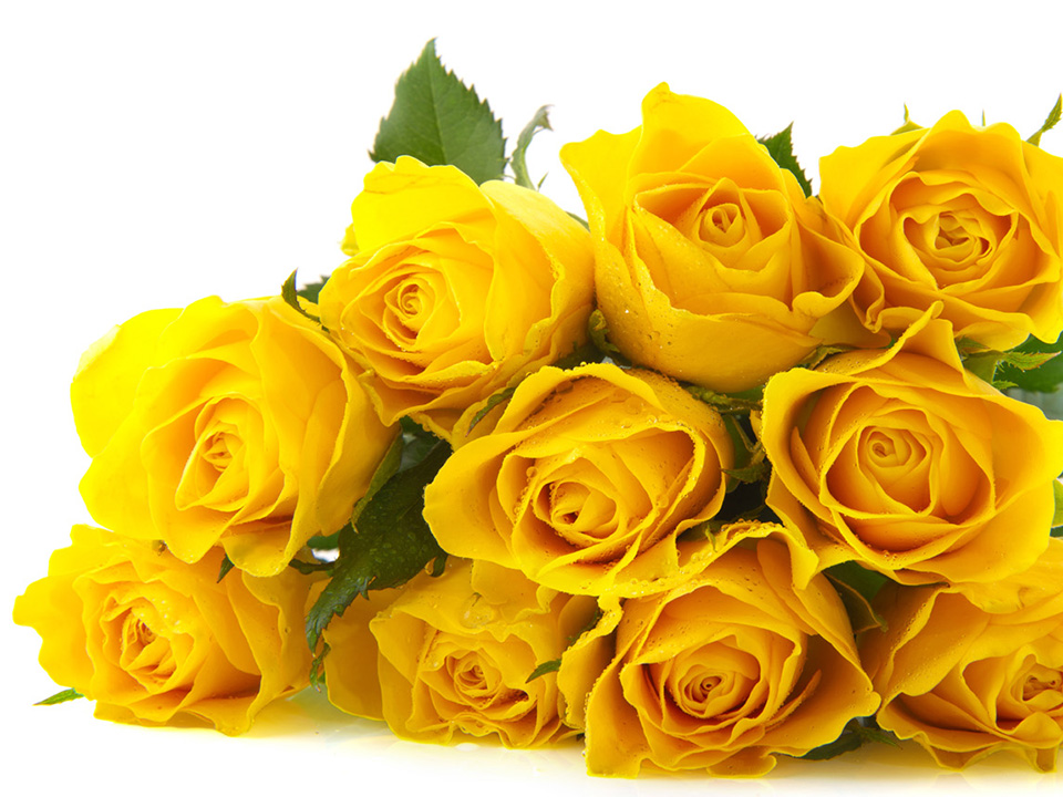 FreeGreatPicture.com-26589-yellow-rose